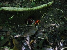 200508 - Costa Rica (54)