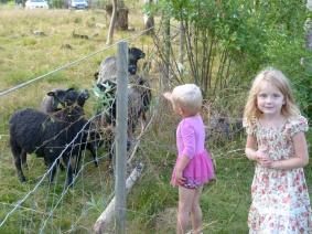 ...och mata fåren igen. Dom börjar få en betingad reflex till att bräka efter mat så fort dom ser de här ungarna.