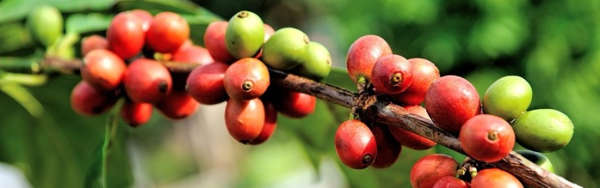 Eftersom kaffe är ettbär