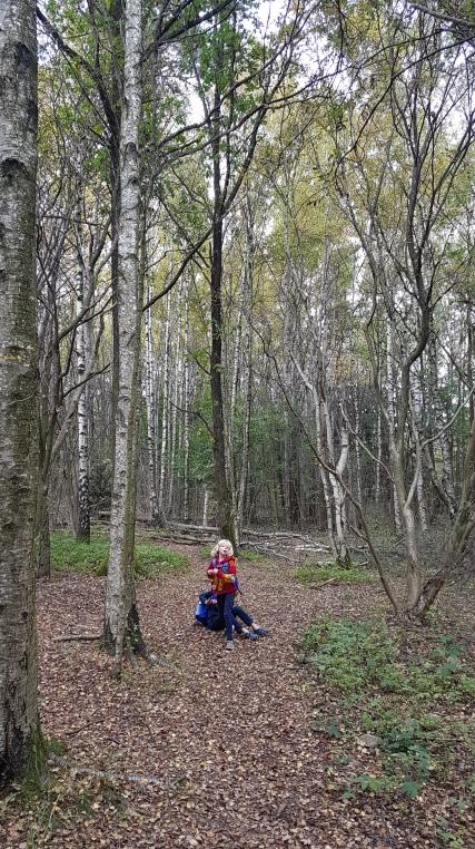 ...och en liten stund senare var vi i en enorm lövsal med höga björkar som silade ner solljuset