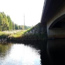 Här vid Ätran ska djuren kunna passera under bron. Det gör dom redan idag - trots att den inte är tillrättalagd. Obildade djur som inte vet sitt eget bästa :)