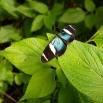 Den här hade vett att sitta still ofta och länge så man kunde ta bra bilder. Tack för väldresserade fjärilar!