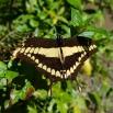 (Var det den hon kallade tigerfjäril?!)