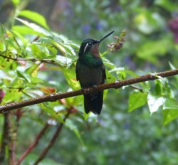 2018-12-29 Selvatura 1 Kolibrier (28)