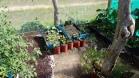 Kaffebönor på tork i växthuset. Annars var det det vanliga; sallad, tomater, gurkor, persilja plus koriander, selleri och en del annat smått och gott. Vi gick ut och skördade till lunchen såklart.