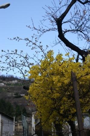 I Aosta var det vår och forsythian hade slagit ut.
